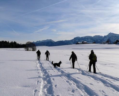 Schneeschuhwanderung mit Hund