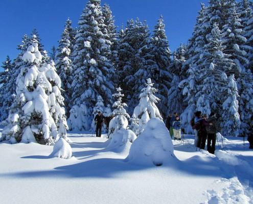 Schneeschuhwanderung im Allgäu am Buchenberg